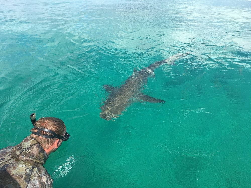 Expedition leader Grant comes face-to-face with a friendly reef shark