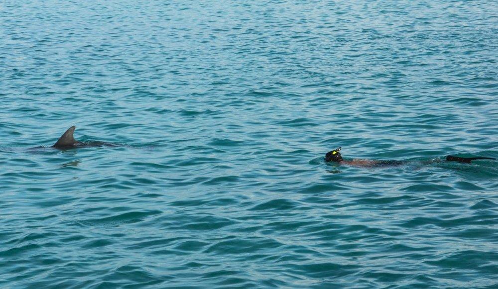 Guest Nick ticks of a dolphin swim bucket list item!