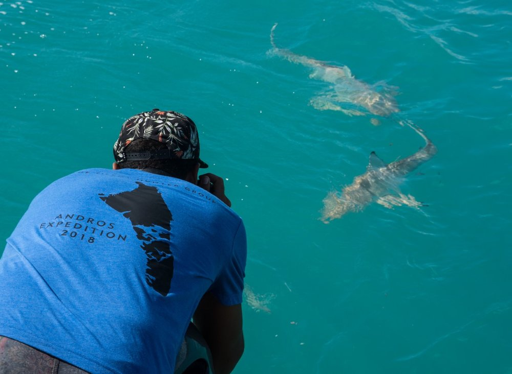 Guest Alex gets a front row seat as he captures some imagery of the photogenic blacktips