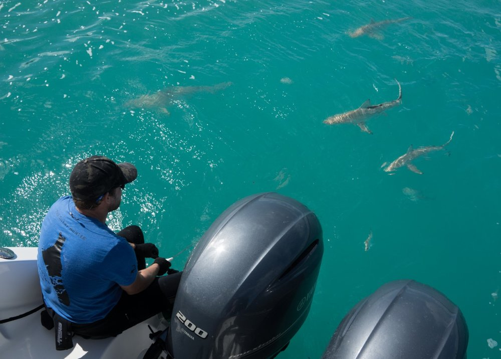 Tristan enjoys the view of 4 sharks growing in confidence, and venturing closer to the boat