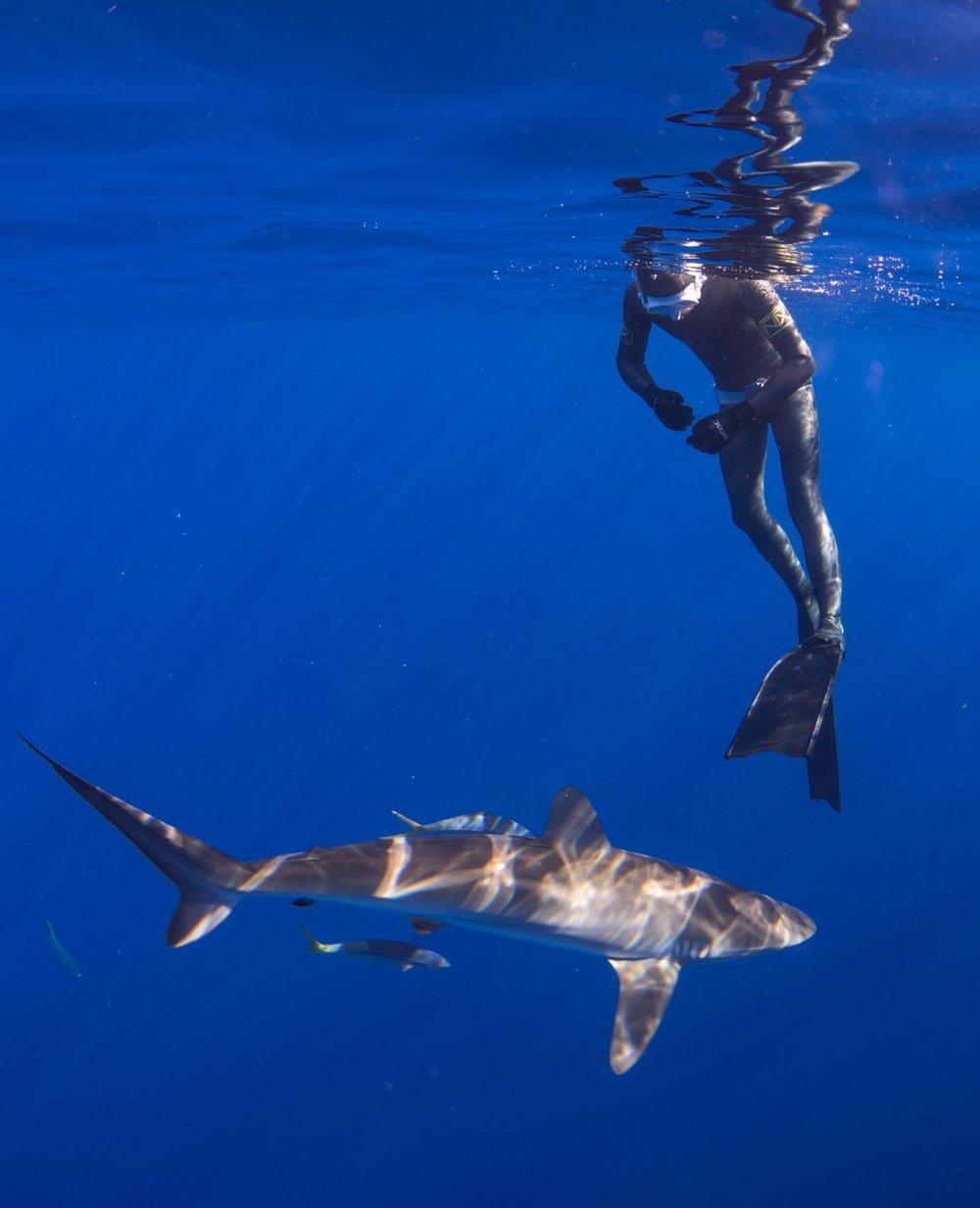 thumbnail_Day 2 - Silky Shark w- Matt.jpg
