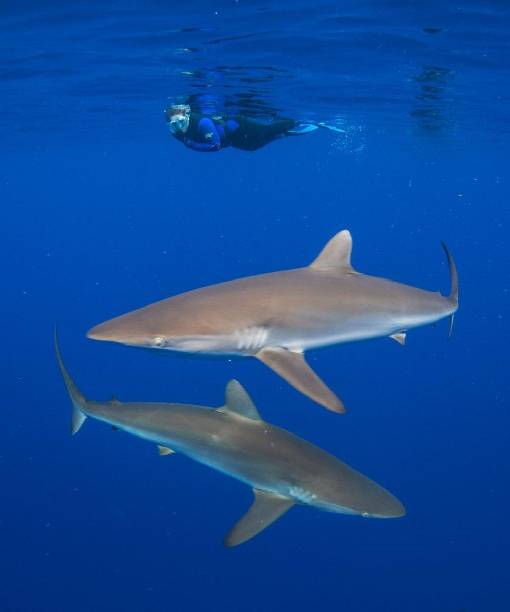 thumbnail_Day 5 - Silky Sharks w- Jenni.jpg
