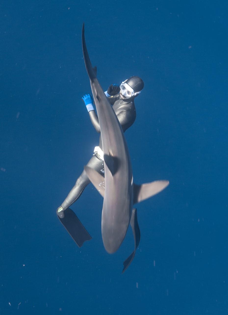 thumbnail_Day 7 - Silky Shark w- Matt 3.jpg