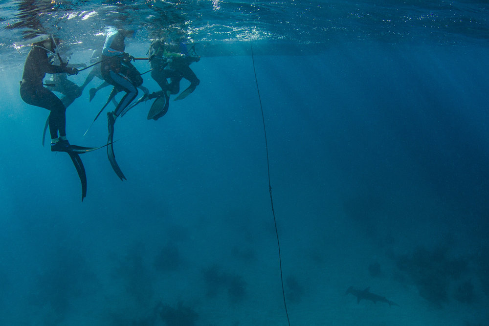 Expedition guests look down on a Great hammerhead shark that remained with them for over an hour!
