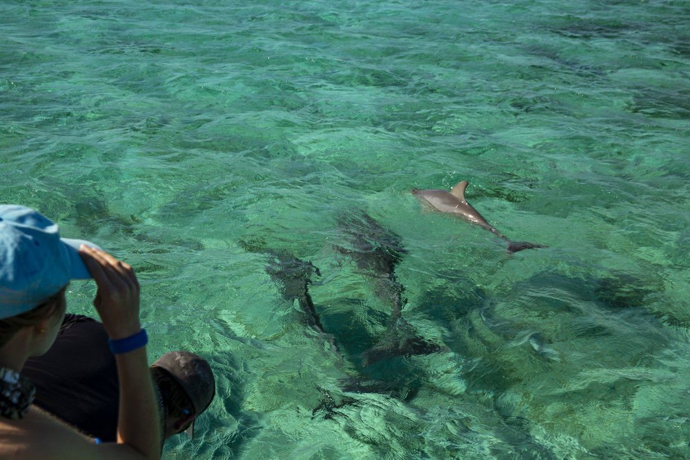 Guests enjoy viewing the dolphins with a front row seat