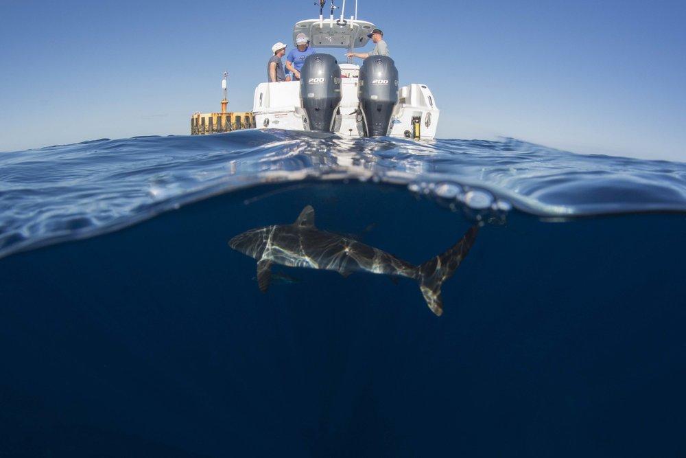 Day two saw dead flat, calm seas, over 25 sharks, mahi mahi, and an incredible amount of other life.