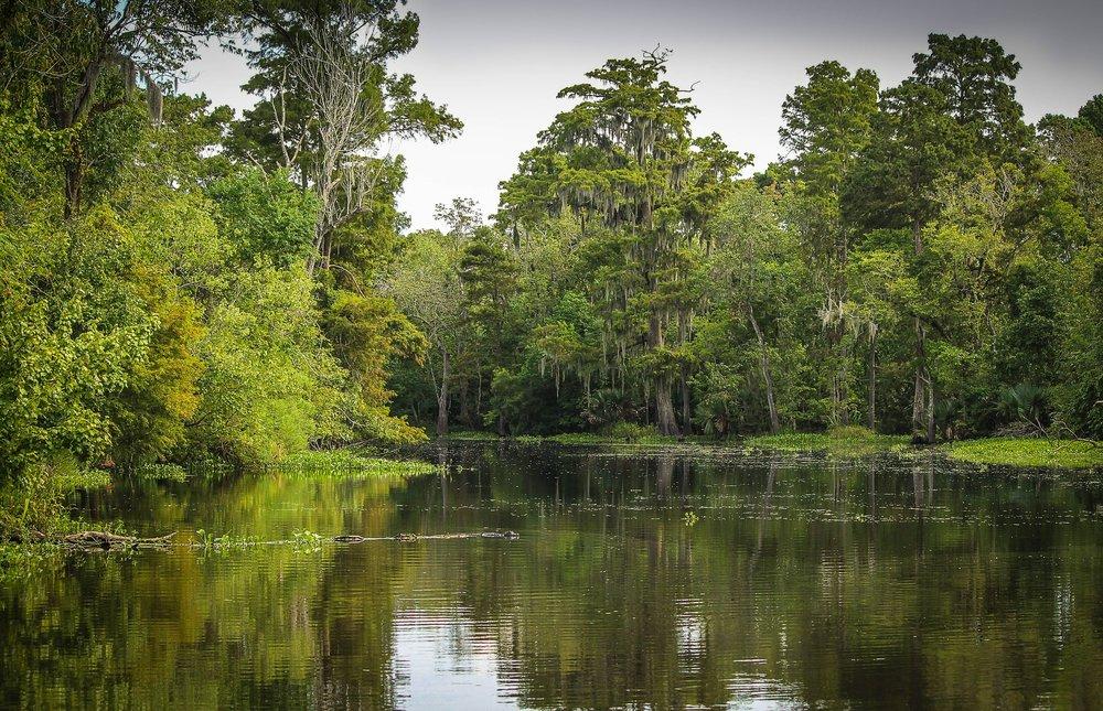 Louisiana Bayou Wetlands