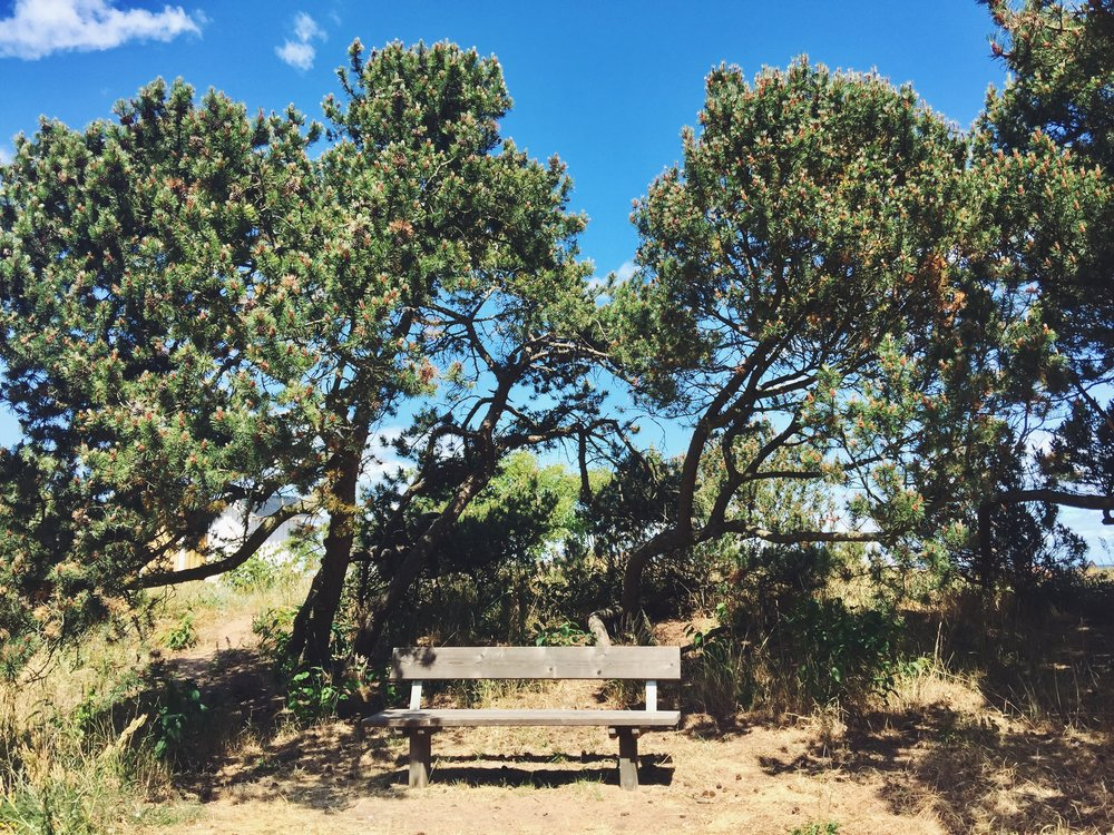 My beloved bench where I got my first sunburn after 2 summers in Sweden.