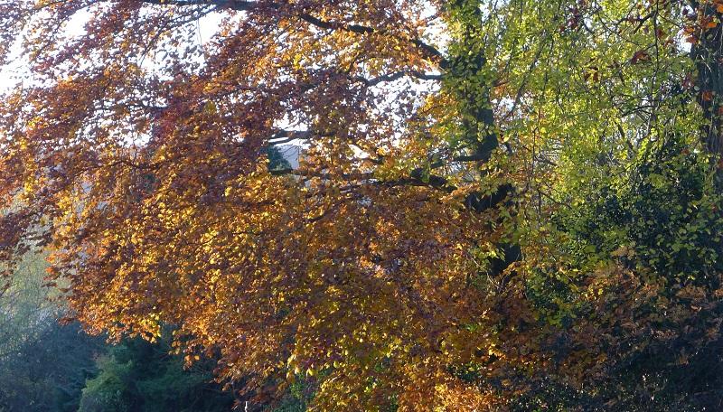 trees+2.jpg