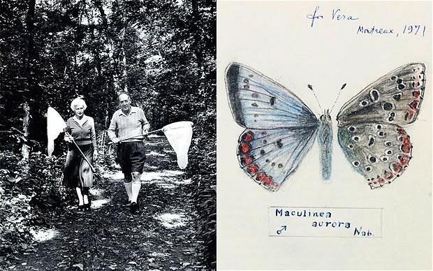 Nabokov-butterfly_1920916b.jpg