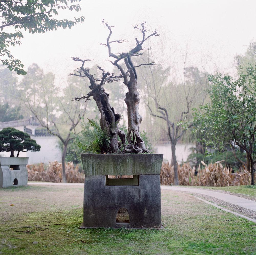 2_bonsai.jpg