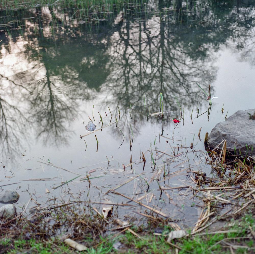 11_turtle-2.jpg