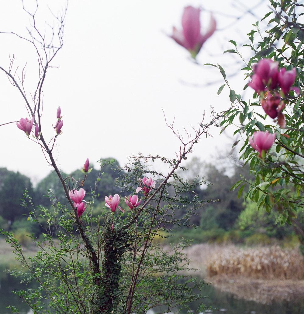 12_pink_flowers-2.jpg