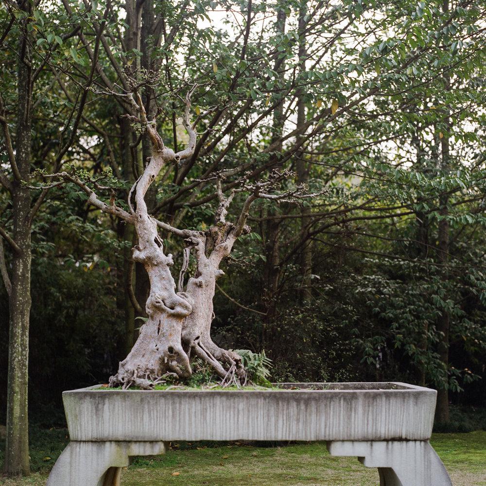 17_bonsai_bonsai.jpg
