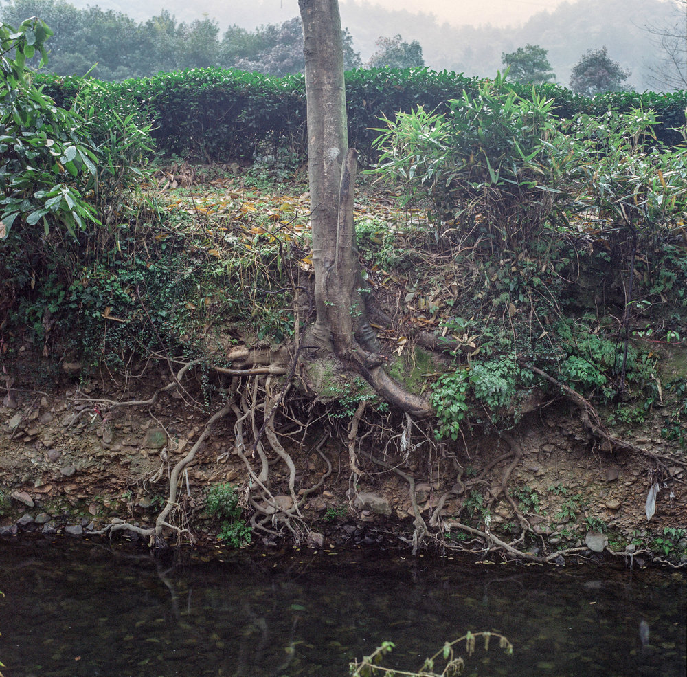 18_tree_roots-2.jpg
