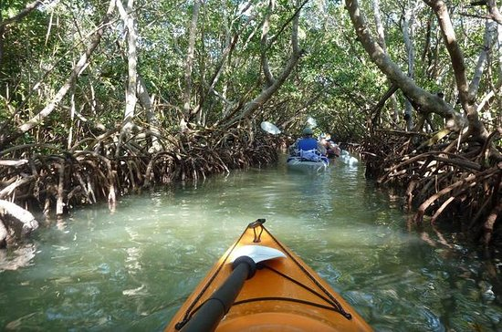 mangrove-tunnel-kayak.jpg