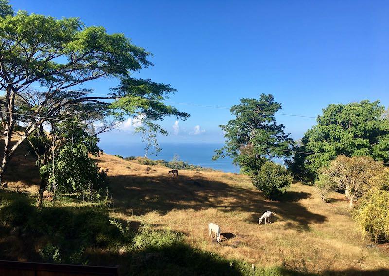 Ocean View4.jpg