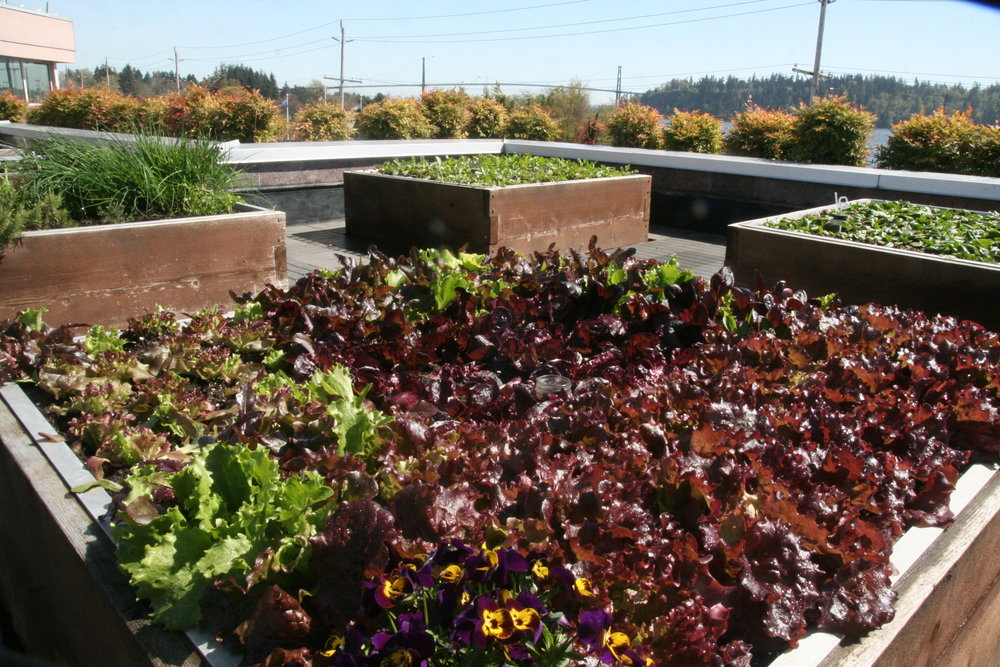 Your Rooftop Garden - ...for Employee Wellness, Penthouse, Condo Living