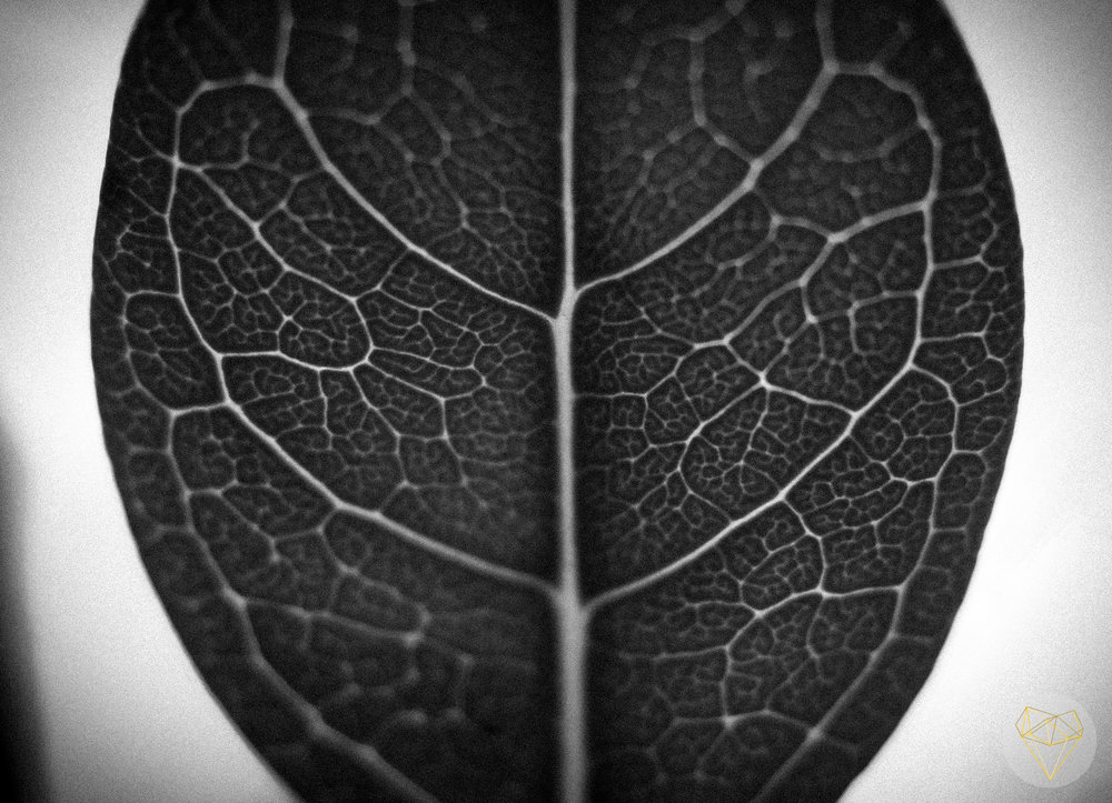I love the patterns that occur so exquisitely in the most mundane leaf.