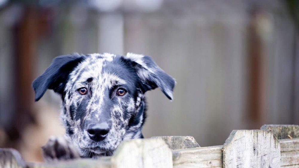 dog - 1 (2).jpg