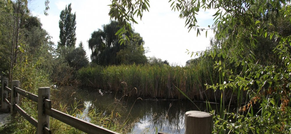 Explore Nature - Connect with nature in your back yard.  Just behind these luxurious townhomes is a hidden gem situated within the heart of the Rutland Community. Biking and walking trails follow a stretch of path that leads to the centre of this beautifully lush park. Here you'll discover a pond that features painted turtles, several species of migratory birds and an abundance of native vegetation.  Dogs are allowed on-leash only.