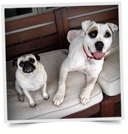 dog-training-services2.jpg