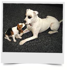 dog-training-recouses.jpg