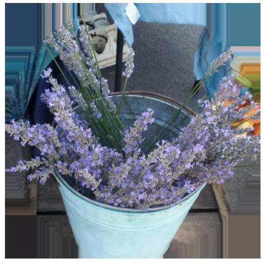lavendarcircle.png