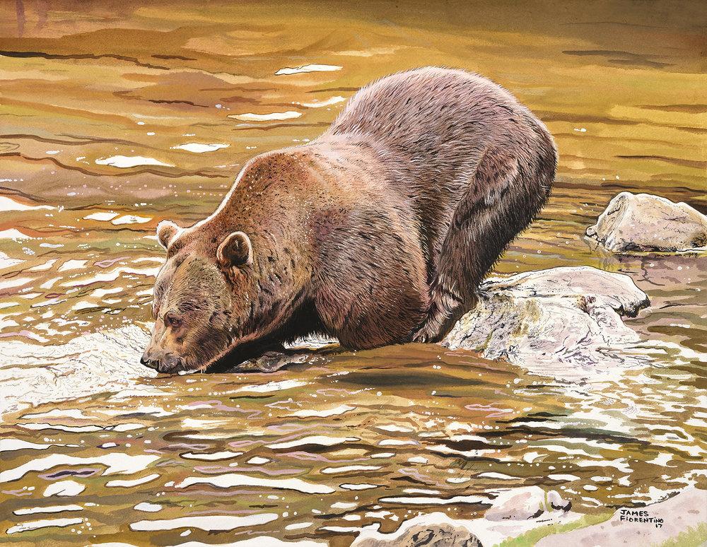 Fiorentino_James_1_Brown_Bear_Fishing (1).jpg