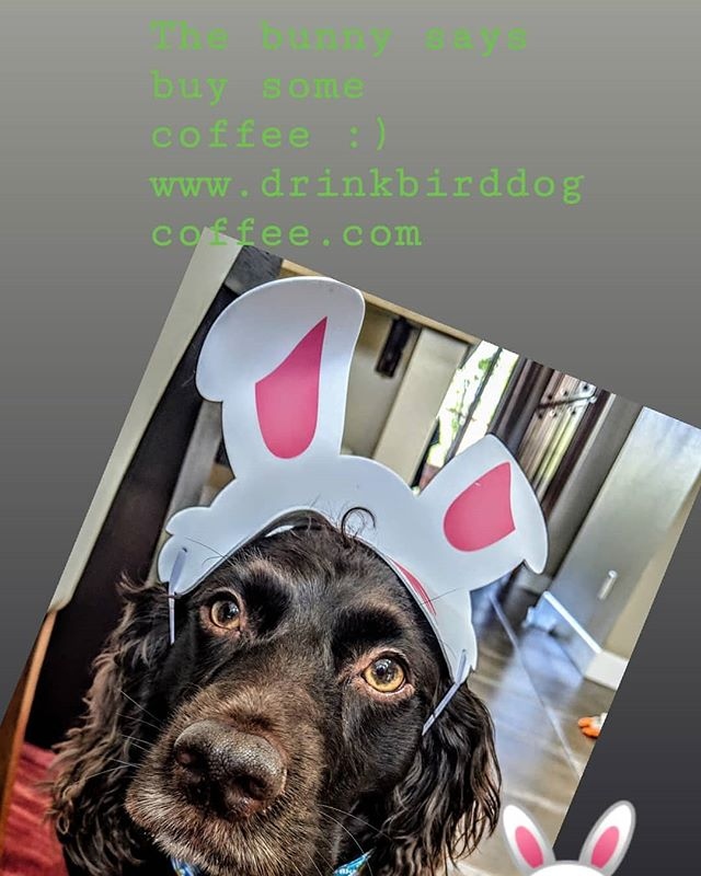 Hoppy Thursday. Stay thirsty my friends ☕ . . . . . . . #birddogcoffee #birdseason #easter #smallbusiness#shopsmall #shoppingonline #boykinspaniels #littlebrowndog #dogsofinstagram