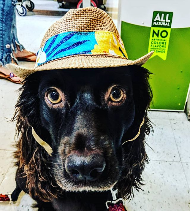 Cool dogs drink Bird Dog Coffee🦆🐶☕ You should be a cool dog !  www.drinkbirddogcoffee.com  #birddogcoffee #birdseason #dogswithjobs#lagunabeach #sportingdogs #huntingdogs #spoileddog #spanielsofinstagram #weekendvibes #smallbusiness