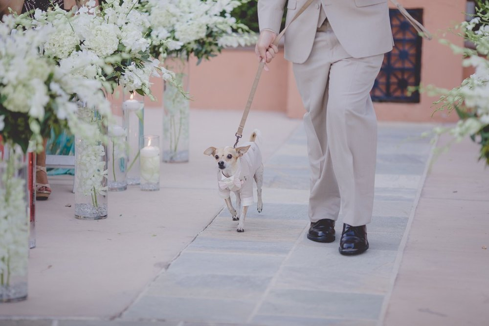 dog-wedding-ceremony