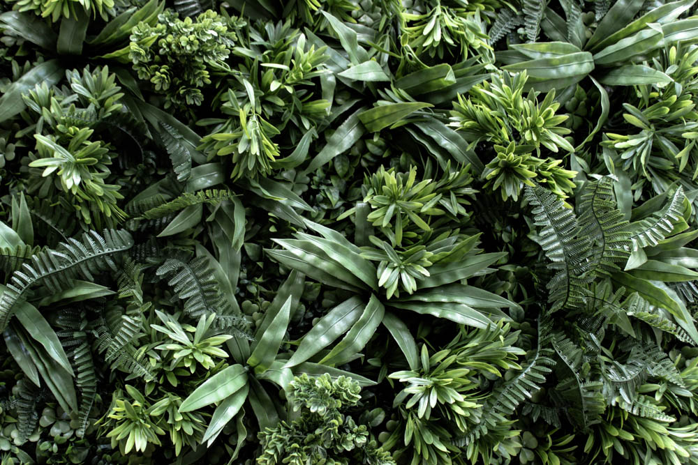 TROPICAL WALL - Perfect for conferences or parties, the Tropical Wall caters to any and all spacesFeaturing high quality real-touch greenery, It has been topped it up with monstera, phalaenopsis and other greens to make it extra lush.Optional addition of white orchids or red poinsettia can be added.Size 2.0m high x 2.0m wide.$P.O.A for day hire or please enquire for multiple day rates.