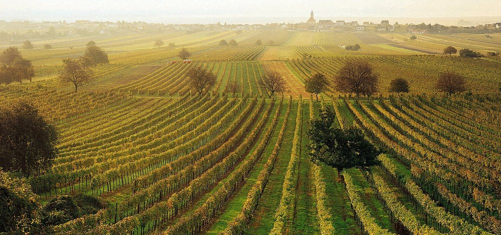 weinbaugebiet-jois-burgenland--o.jpg.3153072.jpg