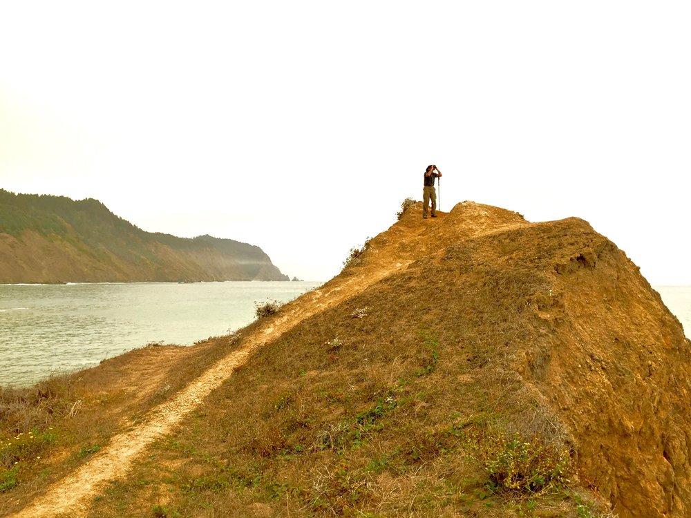 Surveying the scene on Northern California's Lost Coast