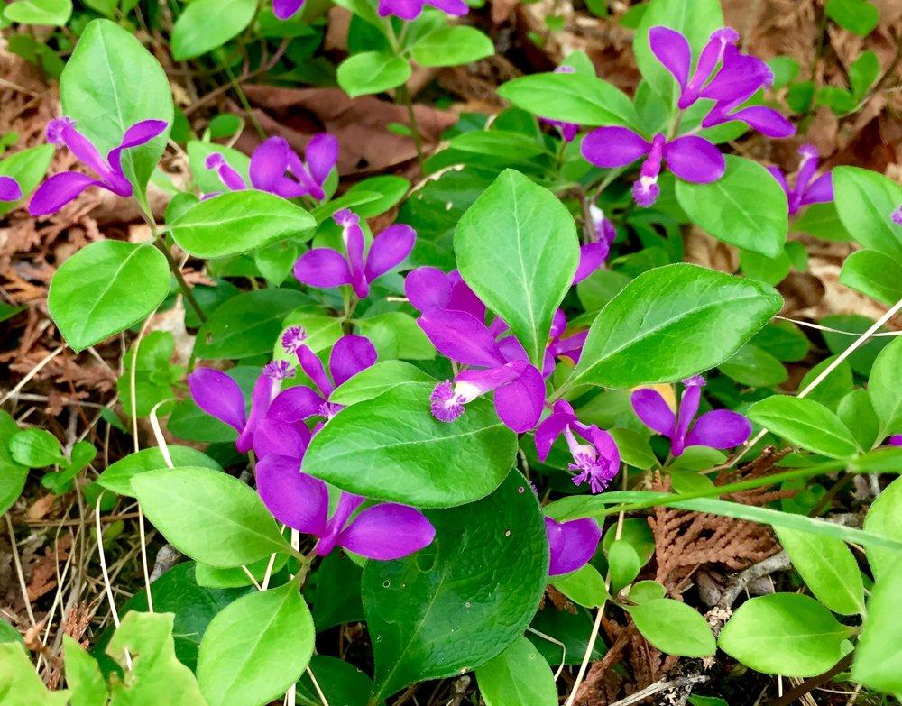 10 - Purple Orchid.jpg