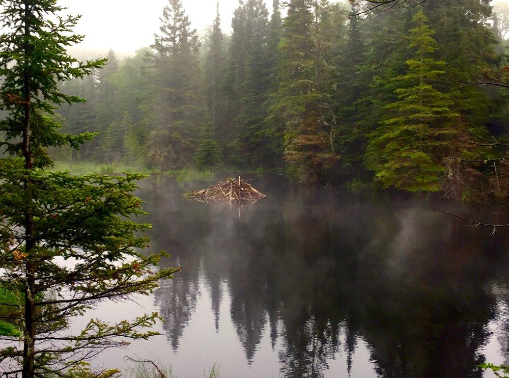 30 - Beaver Hut in the Fog.jpg