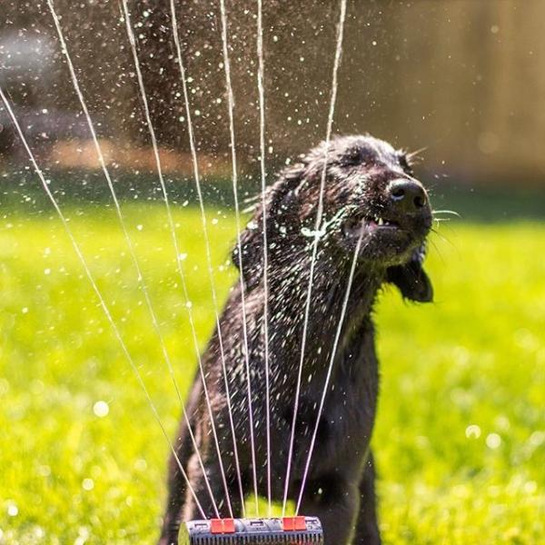 a sprinkler pup.jpg