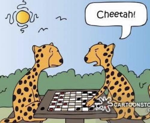 a cheetah.jpg