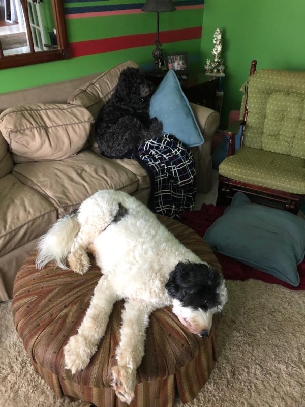 a lazy dogs.jpg