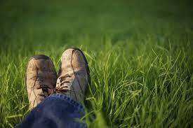 a green pastures.jpg