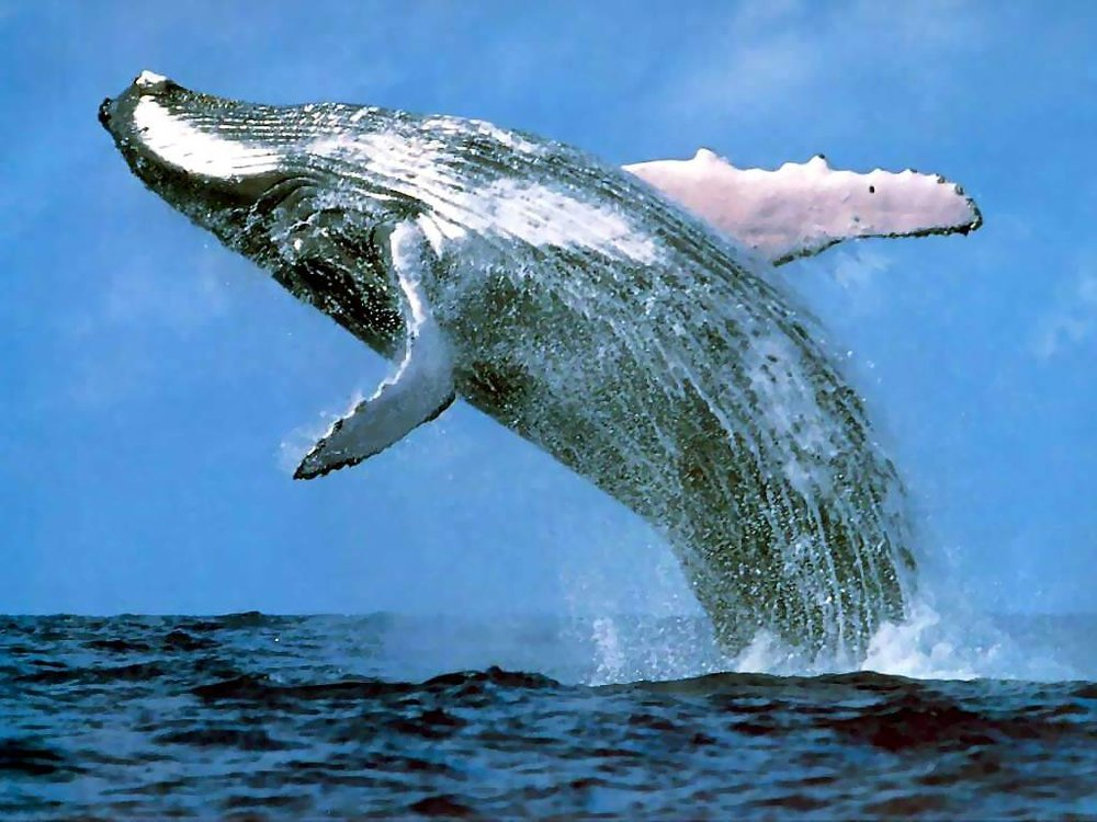 a whale.jpg