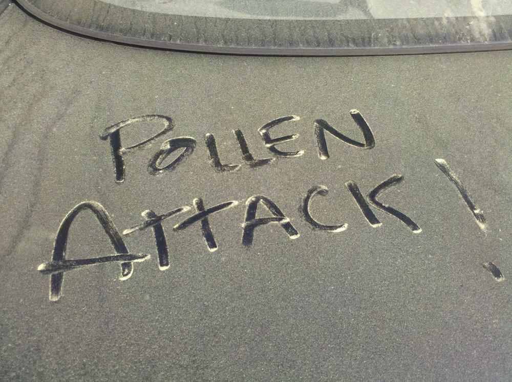 a pollen attack.jpg