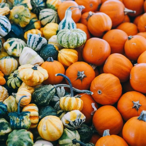 Pumpkins and squash (thanks to Josh Wilburne/Unsplash for the photo)