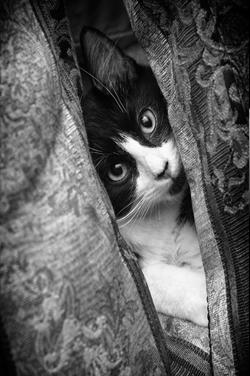 Peek-A-Boo -