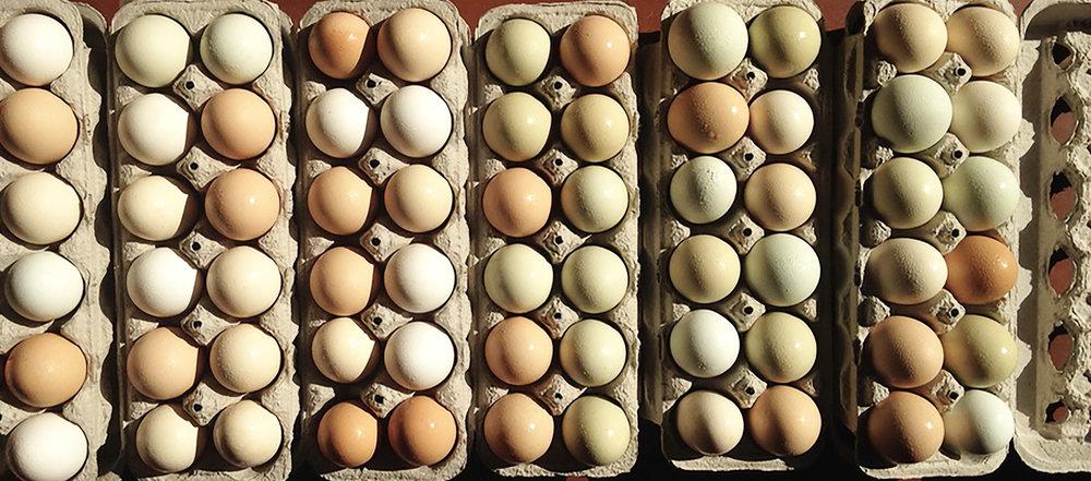 Farm eggs.jpg