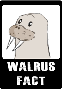 walrus-fact-button.jpg