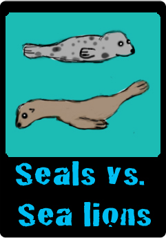 seals vs sea lions button.jpg