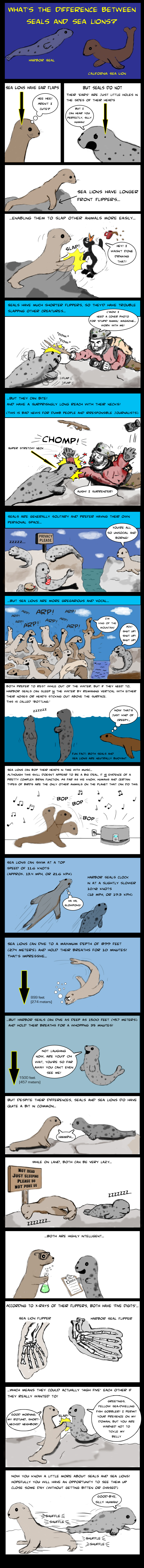 seals vs sea lions.jpg