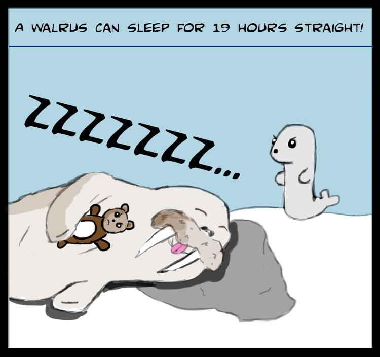 walrus-fact.jpg